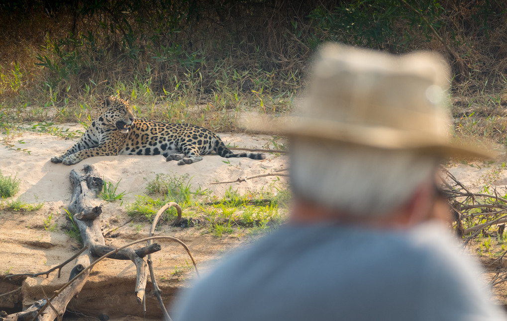 Go Jaguar Spotting
