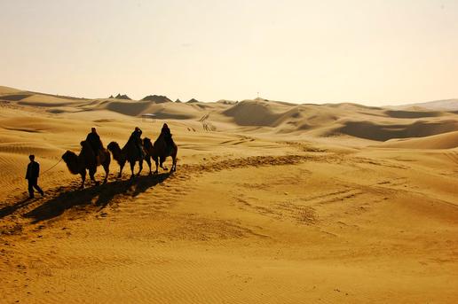 Camels Trekking Taklamakan Desert