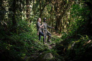 In Search for the Mountain Gorillas