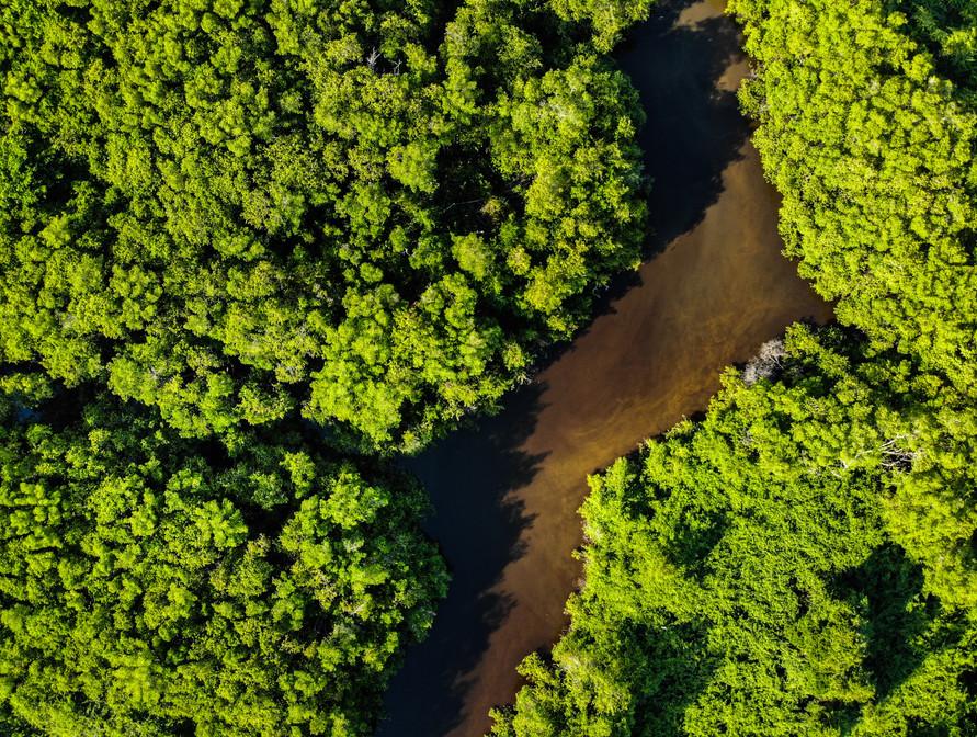Pantanal from Overhead