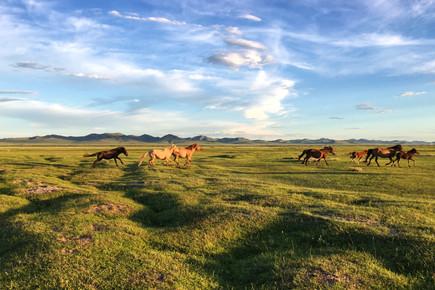 Grassland of Mongolia