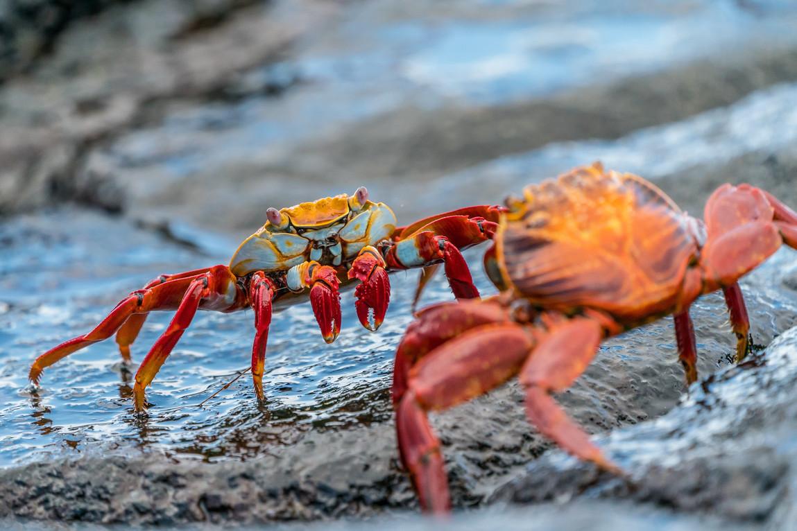 Wildlife Endemic to Galapagos