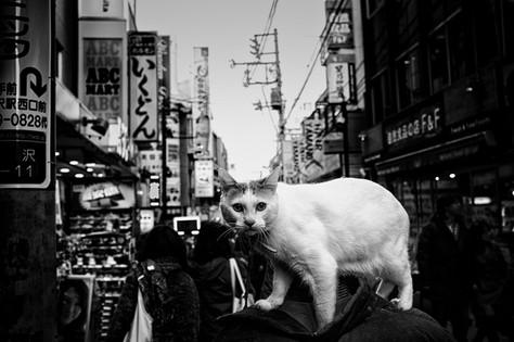 Shimokitazawa_cat.jpg