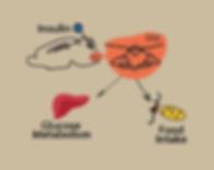 Fir insulin sensing_new.png
