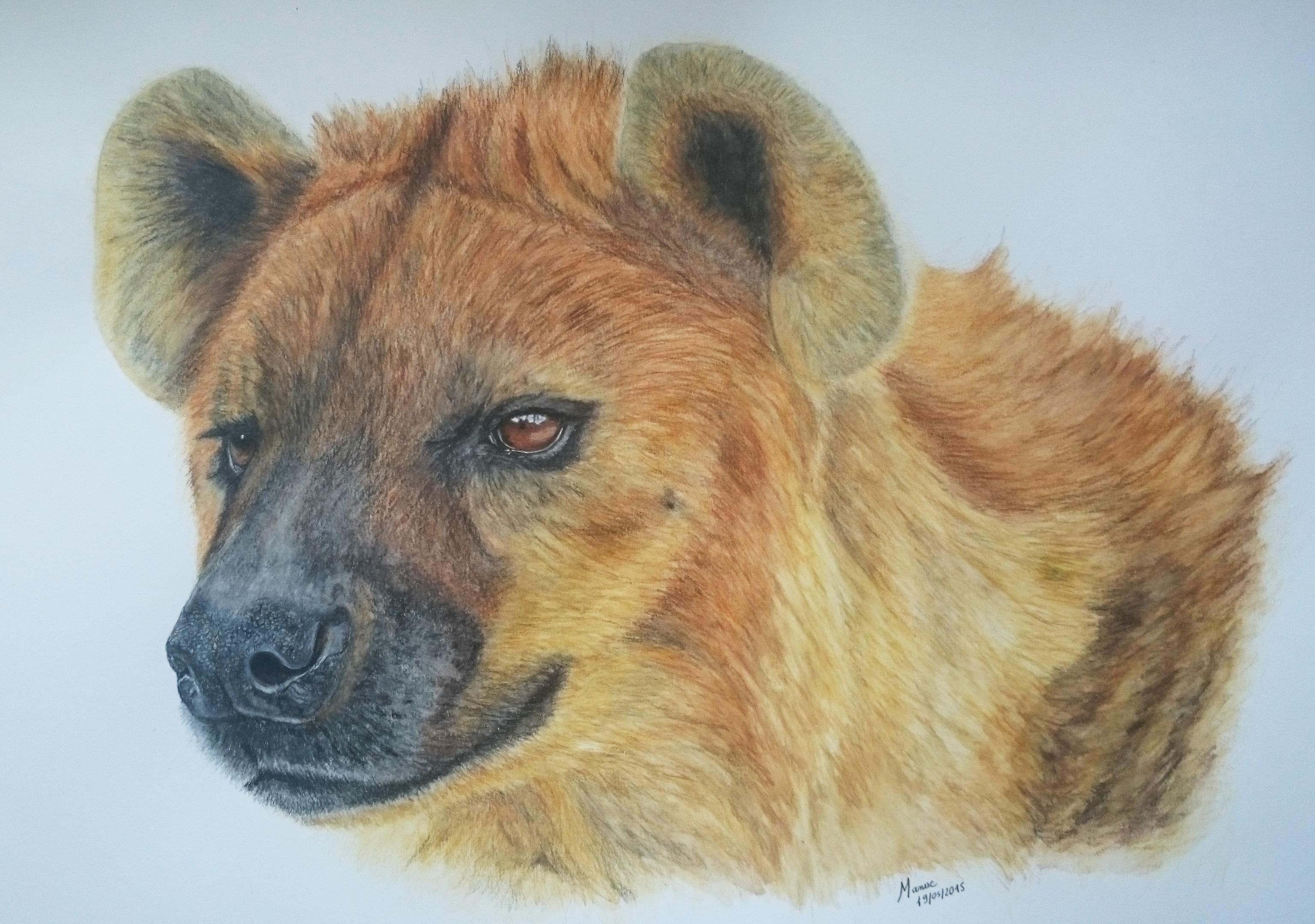 la hyène