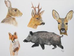 les animaux de nos forêts