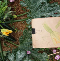 Atelier dessin botanique