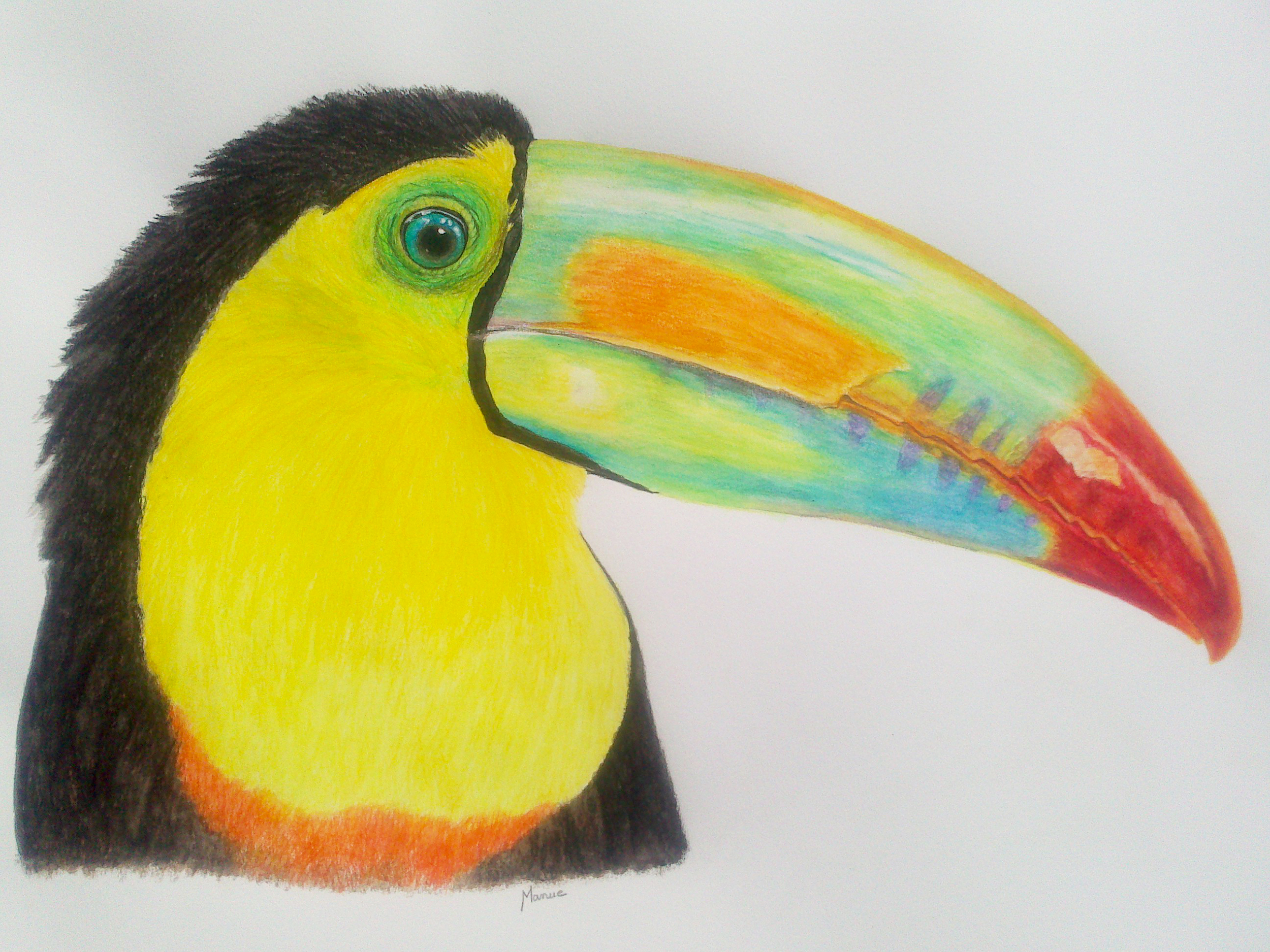 le toucan