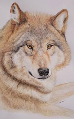 Le loup Manue Guimard