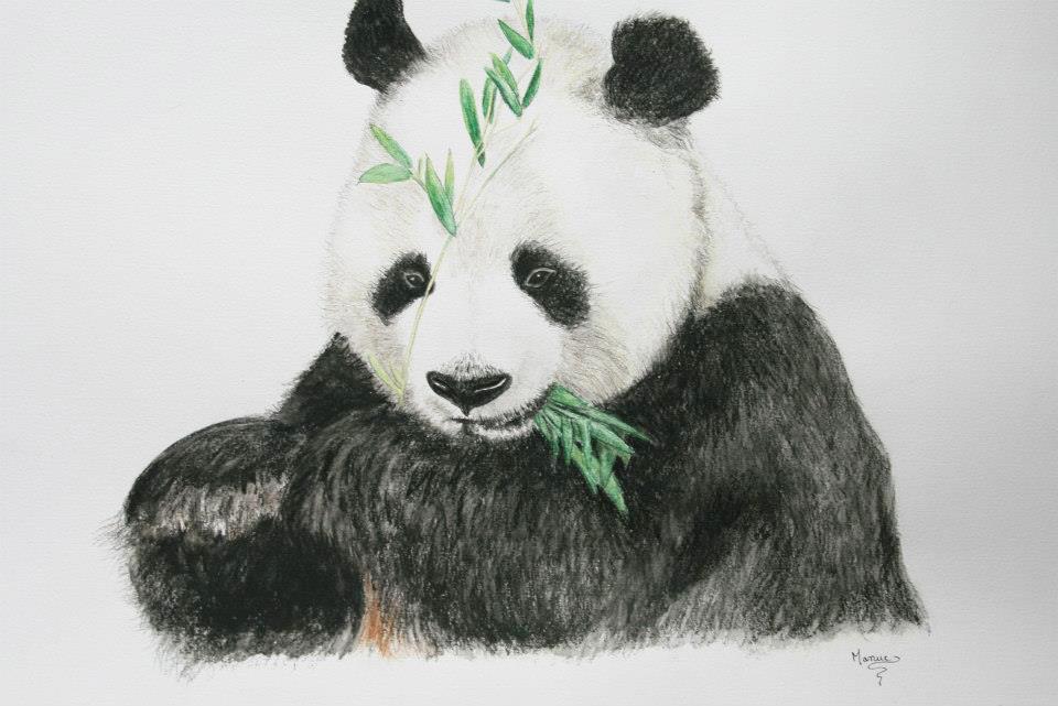 le panda