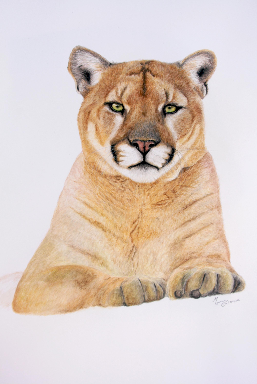 Le cougar_ManueGuimard