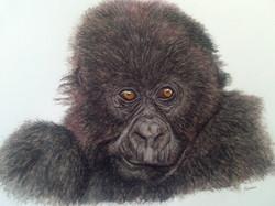 jeune gorille