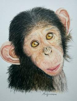 le shimpanzé