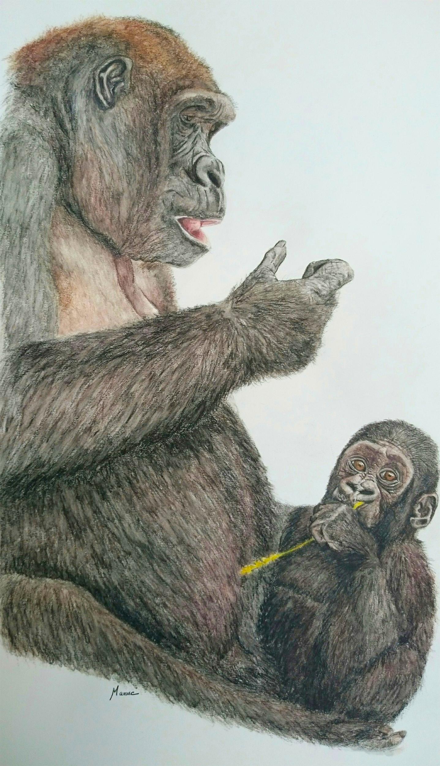 maman gorille et son bébé
