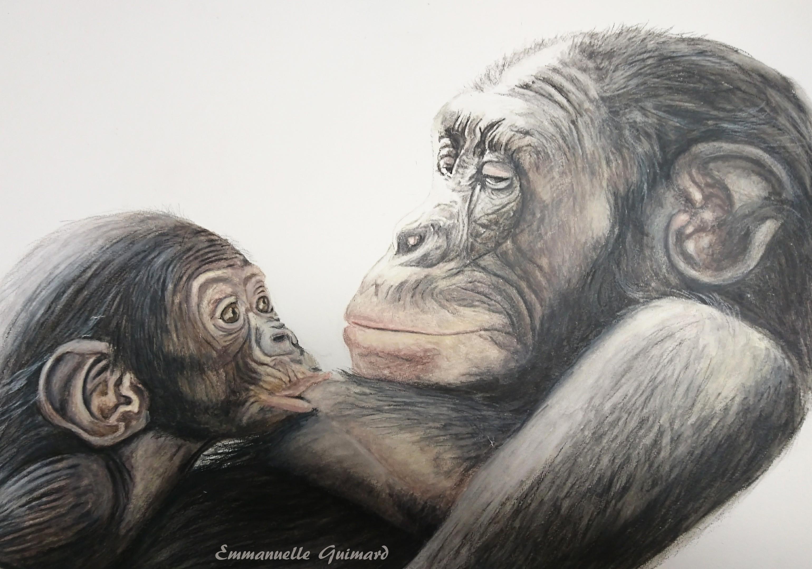 Bébé et maman bonobo