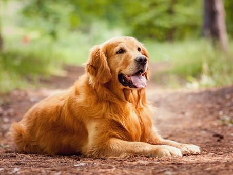 World's Smartest Animals
