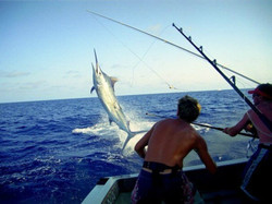 img-bounty-adventures-deepsea-fishing-80