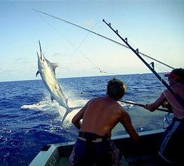 img-bounty-adventures-deepsea-fishing-80