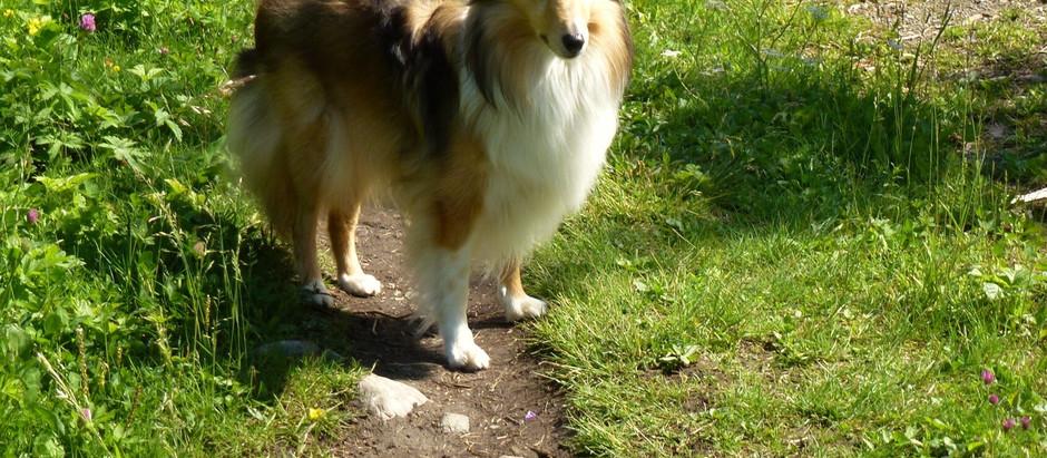 Sommarhunden Belle