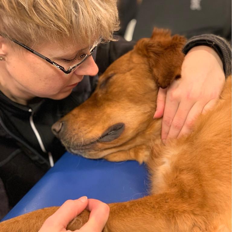 Hundmassage för hemmabruk hos Fjällveterinären