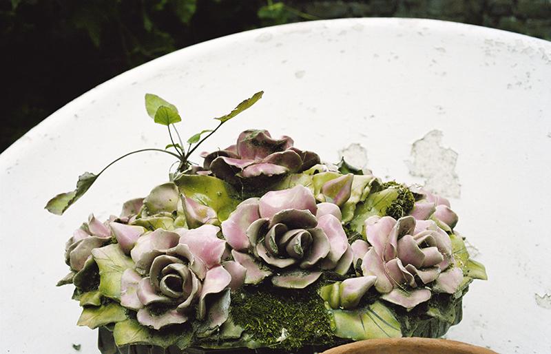 fleursMortes copie