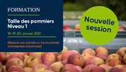 SECONDE DATE : Taille des pommiers (niv.1) - formation 3js