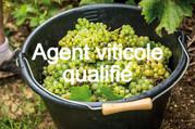 FORMATION EN ALTERNANCE : démarrage du parcours d'Agent viticole qualifié.