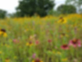 Texas Wildflowers.jpg