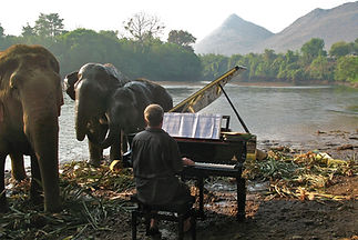 FEURICH Elephants grand piano feurich fo