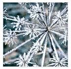 Winterzauber.jpg