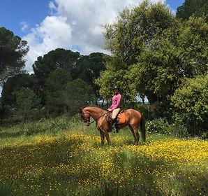 Monter a cheval donana el rocio matalascanas