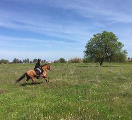 tourisme equestre donana el rocio matalascanas
