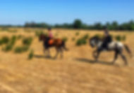 horse riding experience in el rocio, andalusian horses