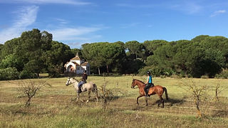 trail riding in donana, andalusian horse