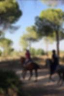 Montar a caballo en el parque nacional de Doñana, caballos andaluces, Huelva