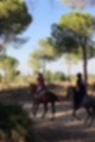 horse riding in donana national park, andalusian horses, Huelva