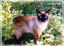 сибирские котята БайкалТенгри