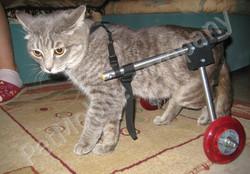 ветеринарные клиники