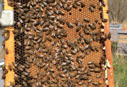 What affects queen quality?