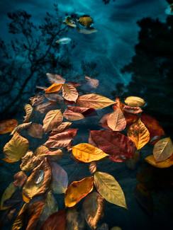Schwimmende Blätter