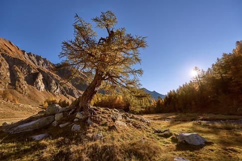 ...und plötzlich stand da dieser tolle alte Baum