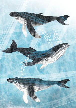 Humpbackwhales.jpg