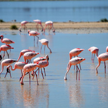 flamingos-2037497_1920.jpg