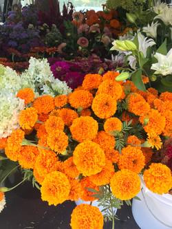 Jedi Orange Marigolds