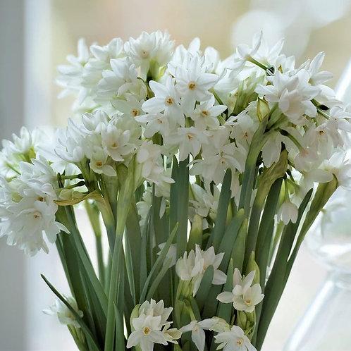 """Narcissus Paperwhite Nazareth 8"""" Planter"""
