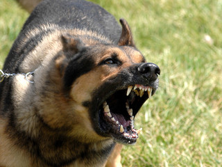 Dog Bite Lawsuits In South Carolina