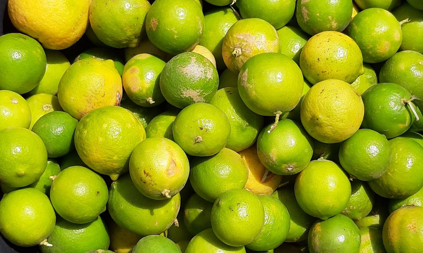 citrons frais01.jpg
