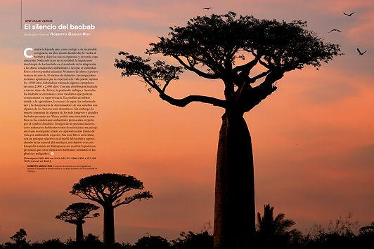 Baobab_es.jpg
