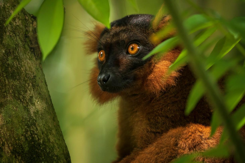 Roberto García Roa (Madagascar)