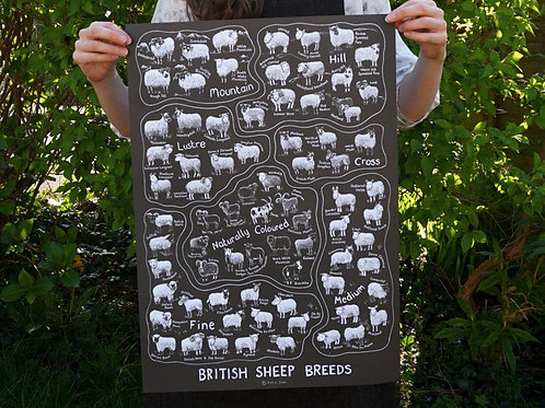 British Sheep Breeds_A2 Poster Black(A2海報_黑)